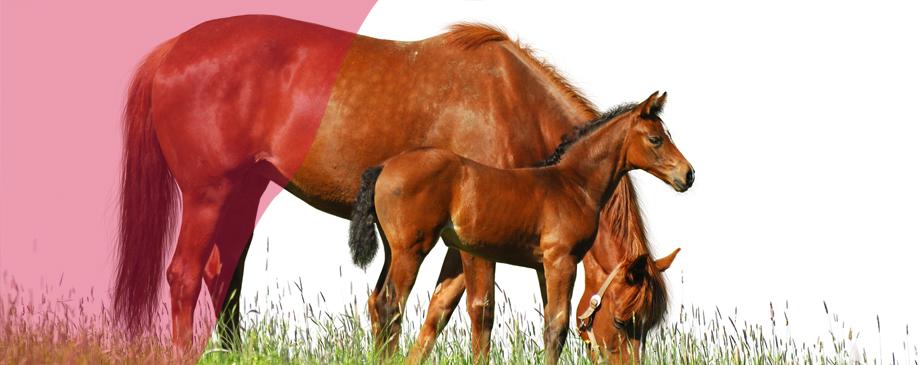 Pegus Horse Feed