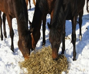 group horses