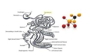 digestion atom